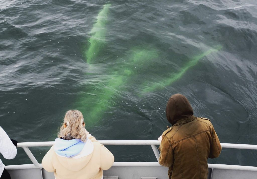 Tourists watching whale swim underneath their boat