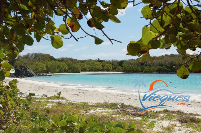 Playa La Plata in Vieques, Puerto Rico