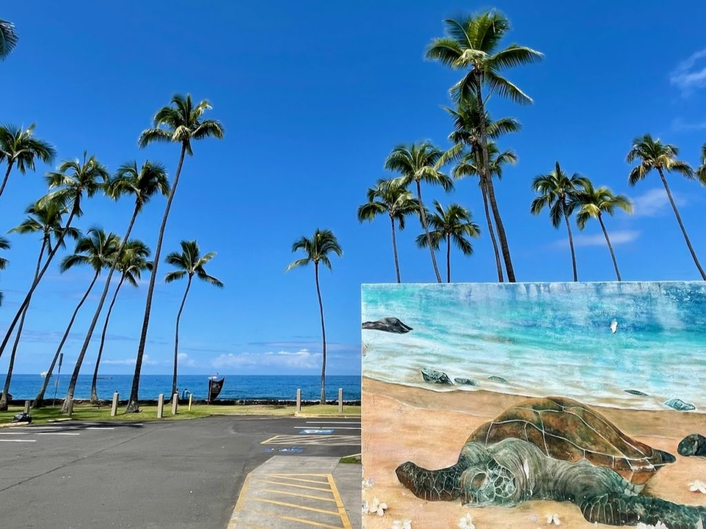 Palm trees surrounding a parking lot with a photo insert of a turtle resting on the beach