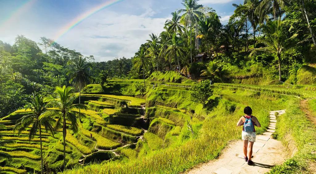 Woman walking along tiered fields in Bali
