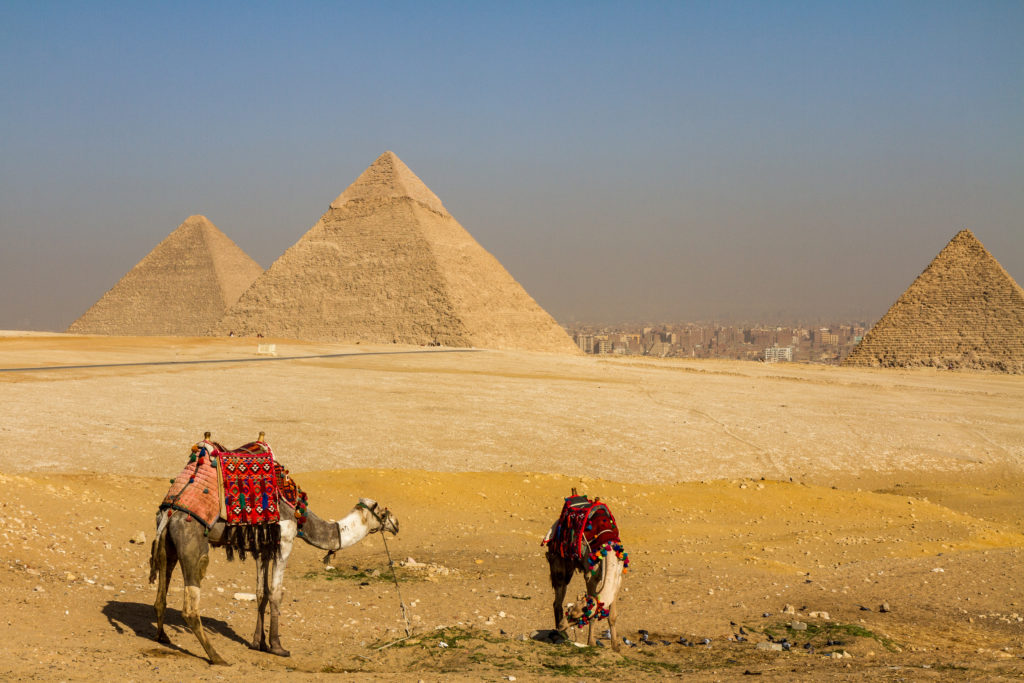 Two camels in front of the Pyramids of Giza with Cairo in the background