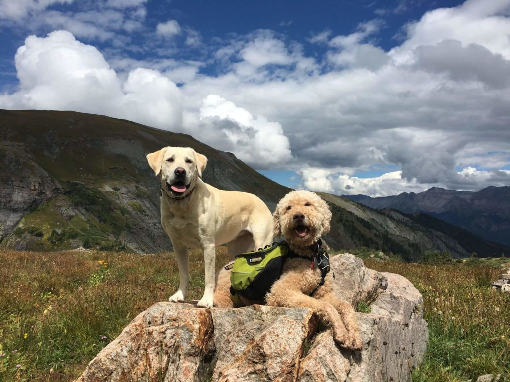 Two dogs enjoying a hike near the Lumiere with Inspirato hotel