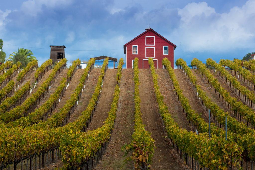 Vineyard in Healdsburg, California